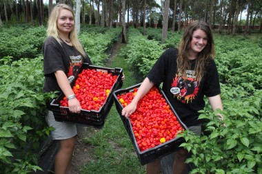 Hot Chilli pickers...Jarmilla and Linda
